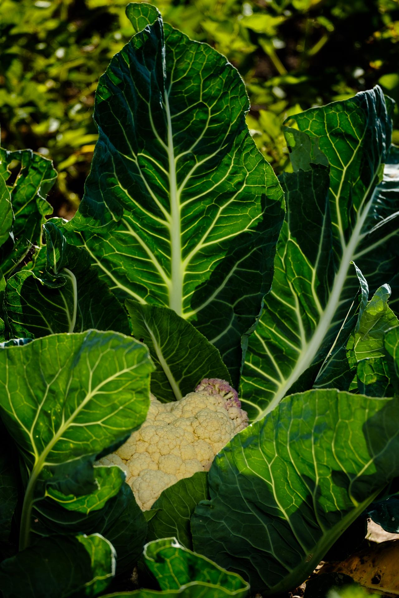 Garden Project - 248 - DSCF0628 copy.jpg
