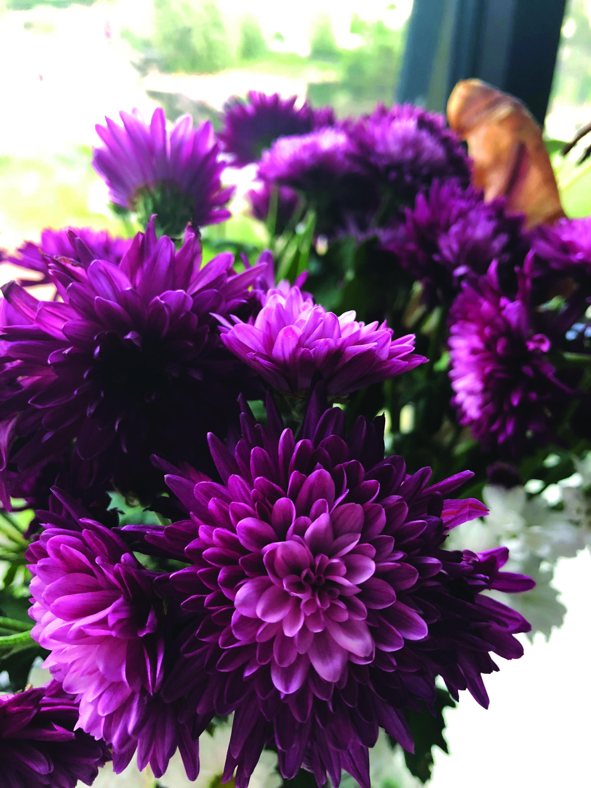 Flowers Closeup.JPG