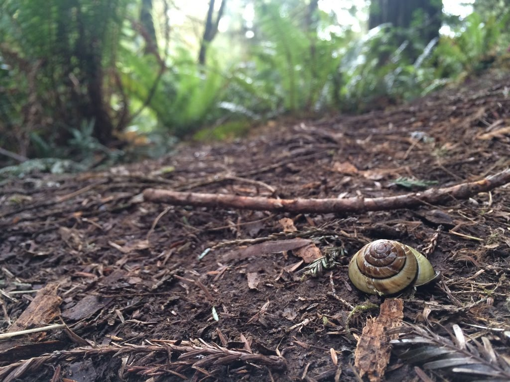 Forest floor, where mysteries live. From a visit to the redwoods a few years ago.