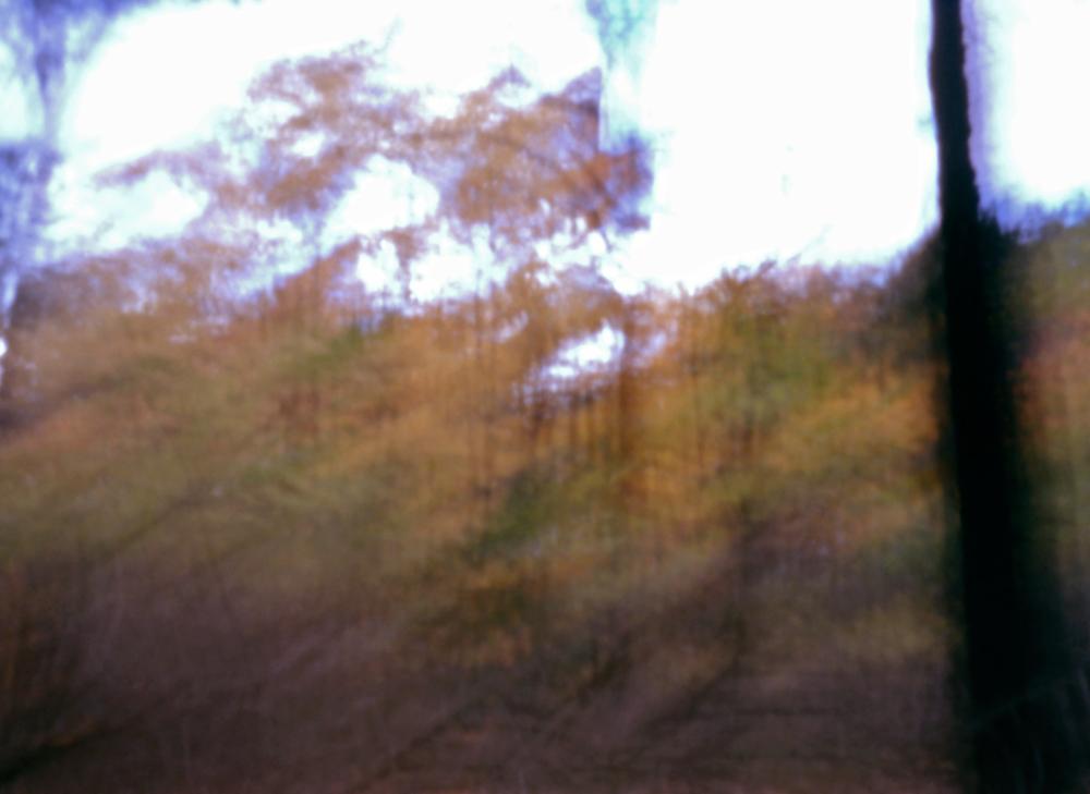 Pinhole4_Forrest.jpg