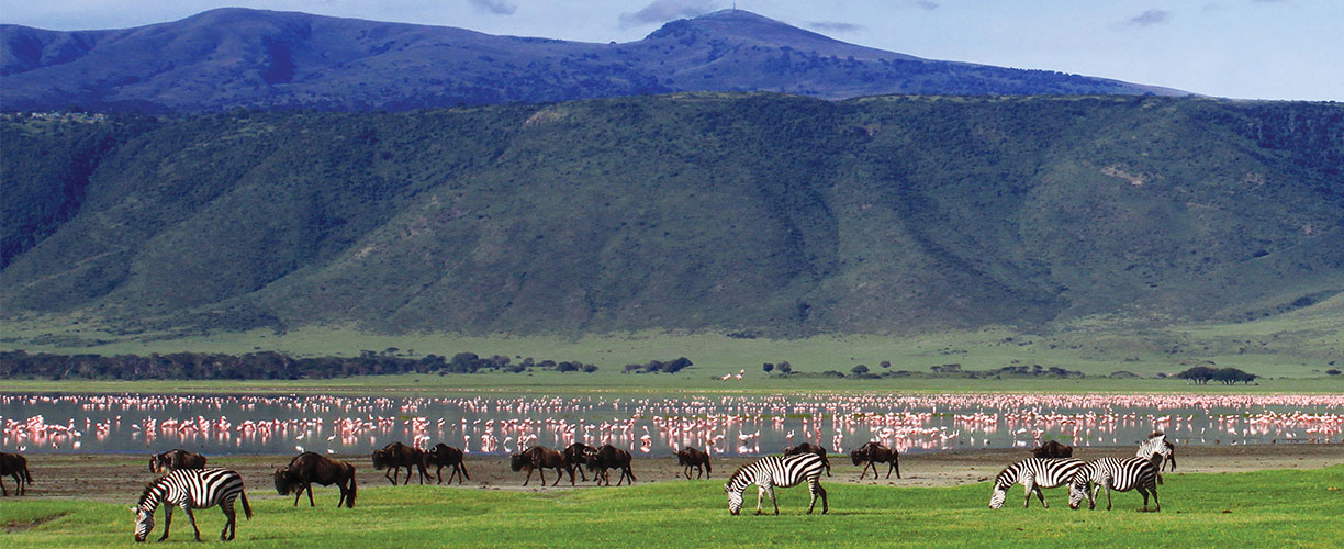 Africa-Tanzania-Ngorongoro-Crater-Zebras-and-Flamingos.jpg