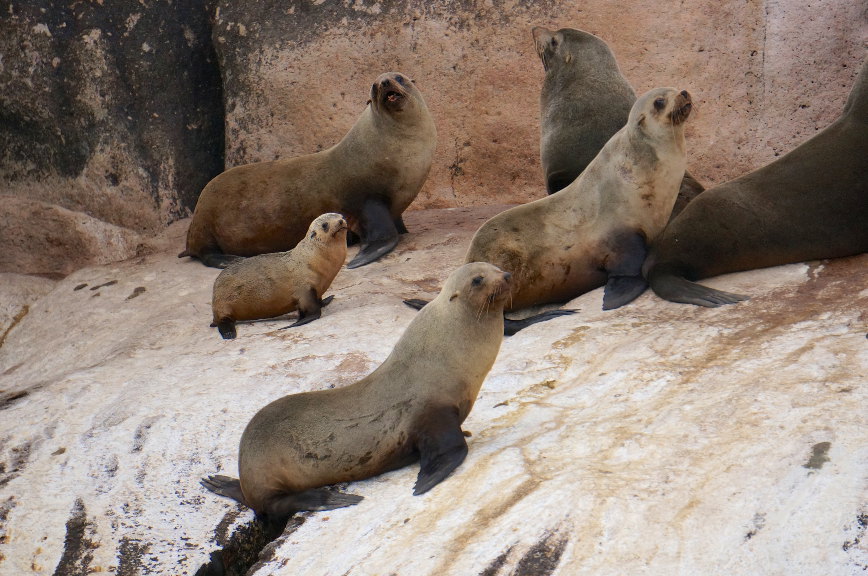 Saffire_Freycinet_Seals.jpg