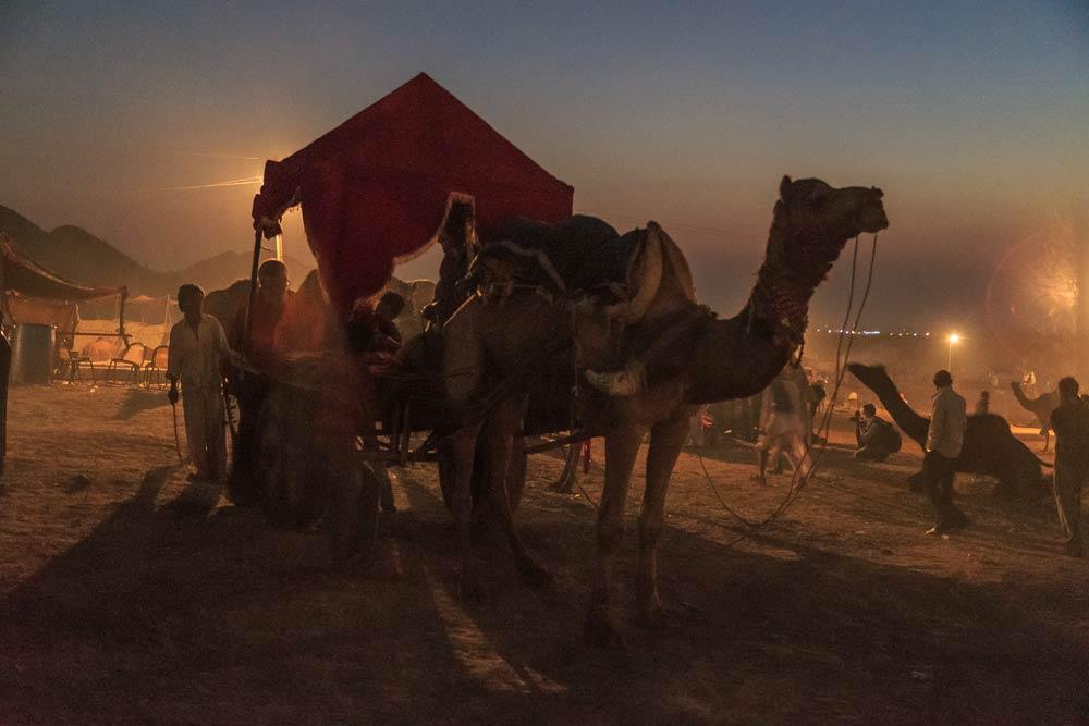 India-rajasthan-sunset-02-pushkar-camel-fair-copyright-lewis-kemper.jpg