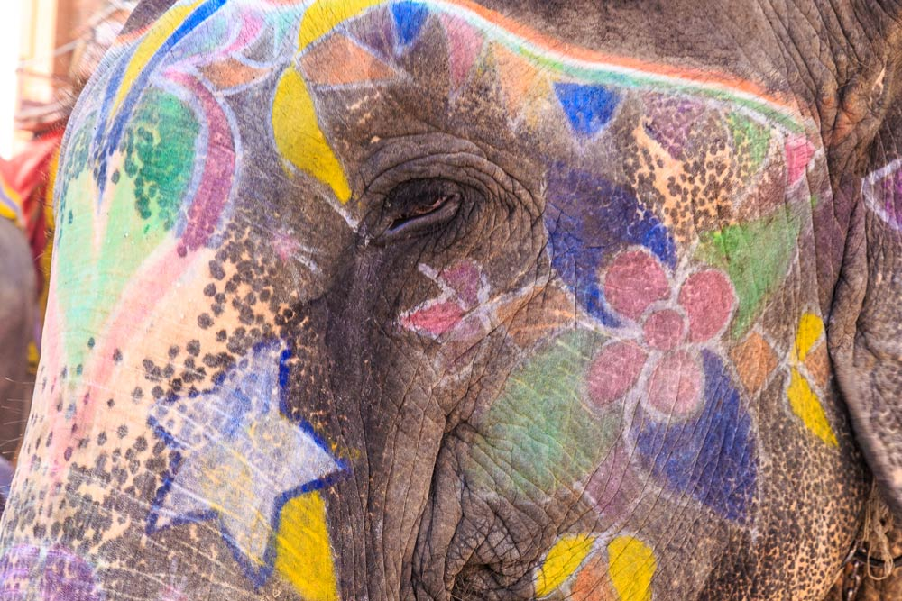 India-jaipur-painted-elephant-copyright-lewis-kemper.jpg