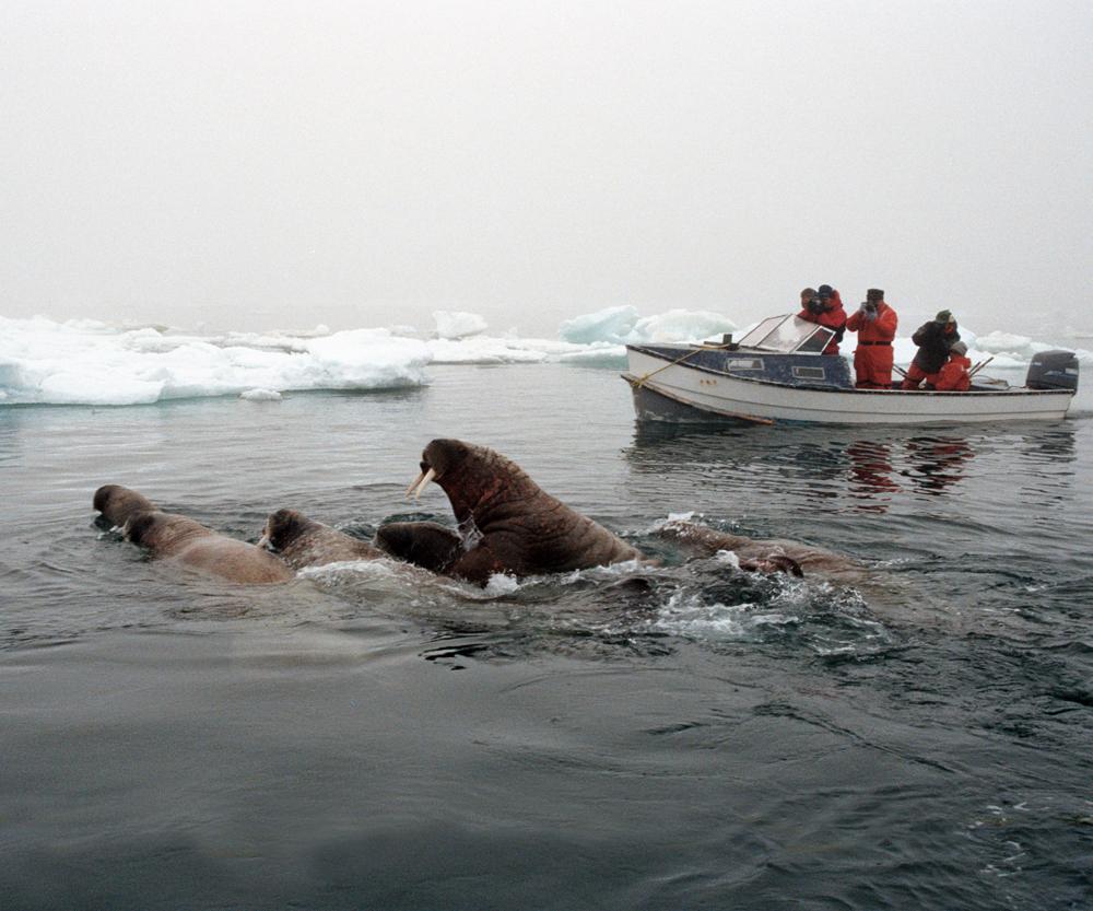 AK_Walrus_Boat2.jpg