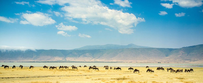 Africa-East-Africa-Tanzania-Herd.jpg