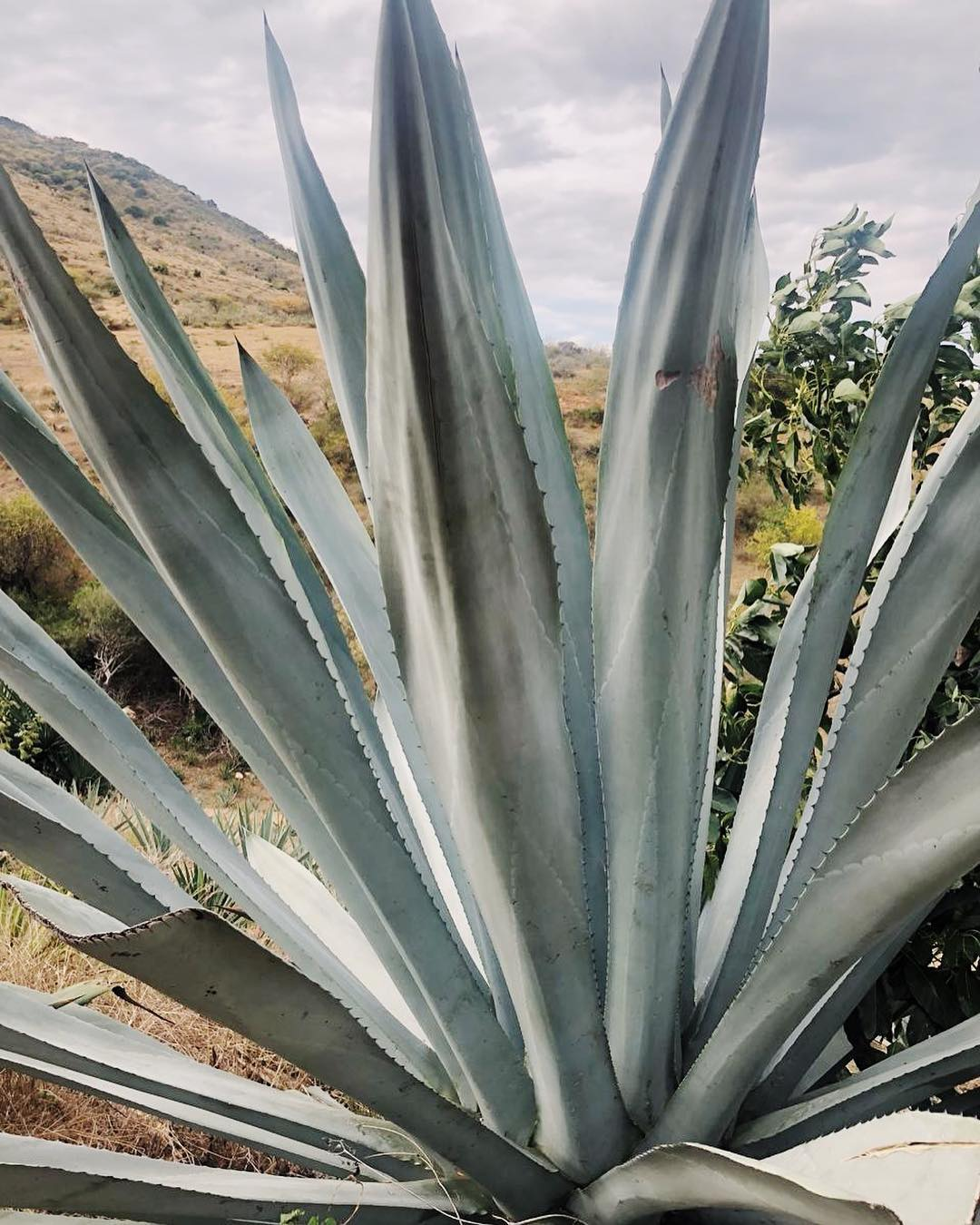 TOURISM + SOCIAL IMPACT - We create a pact of mutual development between agave-producing communities and a tourism collective to increase social and economic welfare.