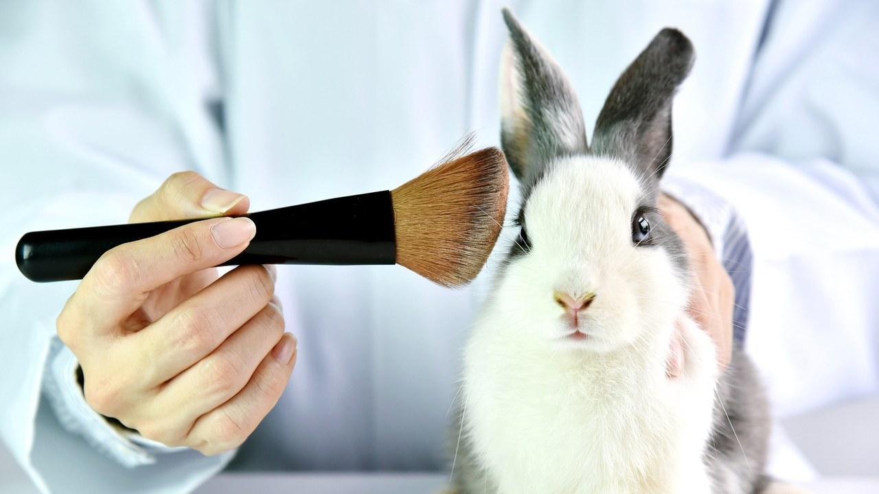 出典: https://www.allure.com/story/california-cruelty-free-cosmetics-act-bill