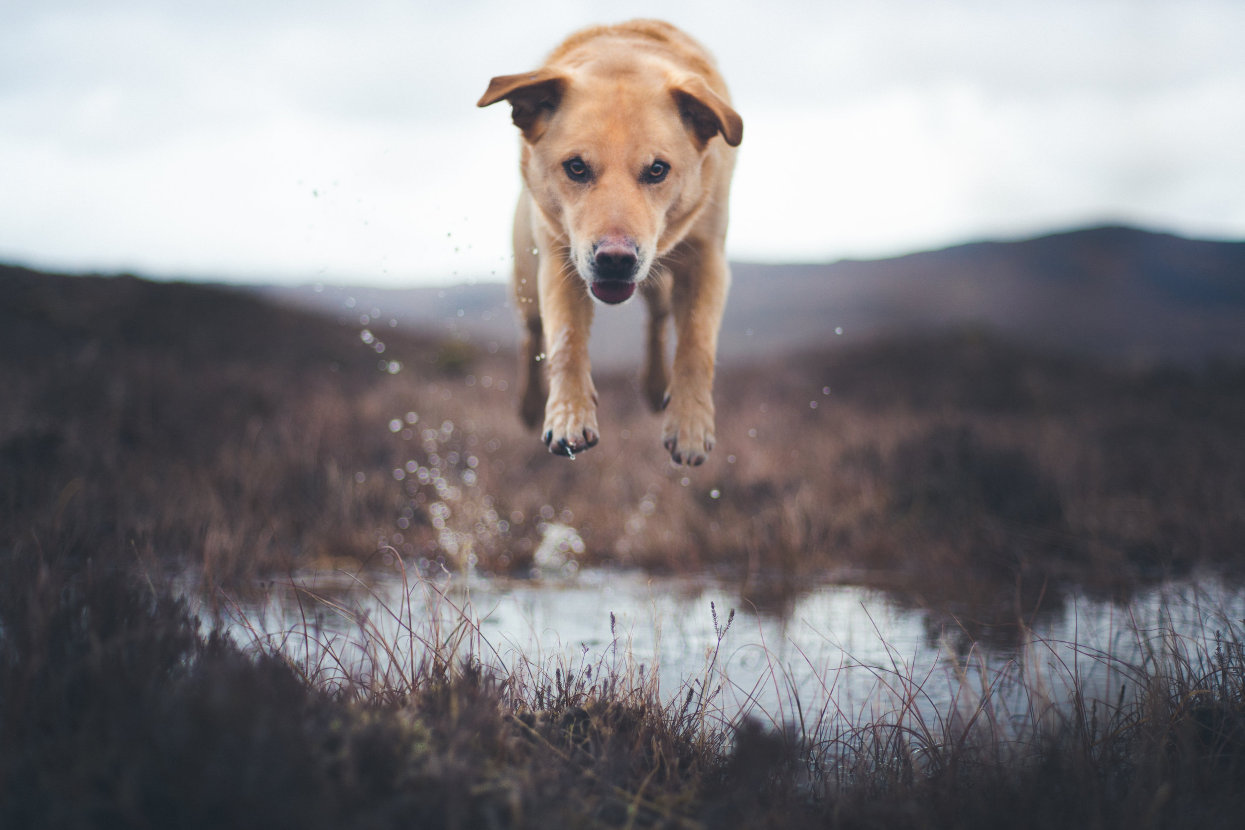 dog-1-7.jpg