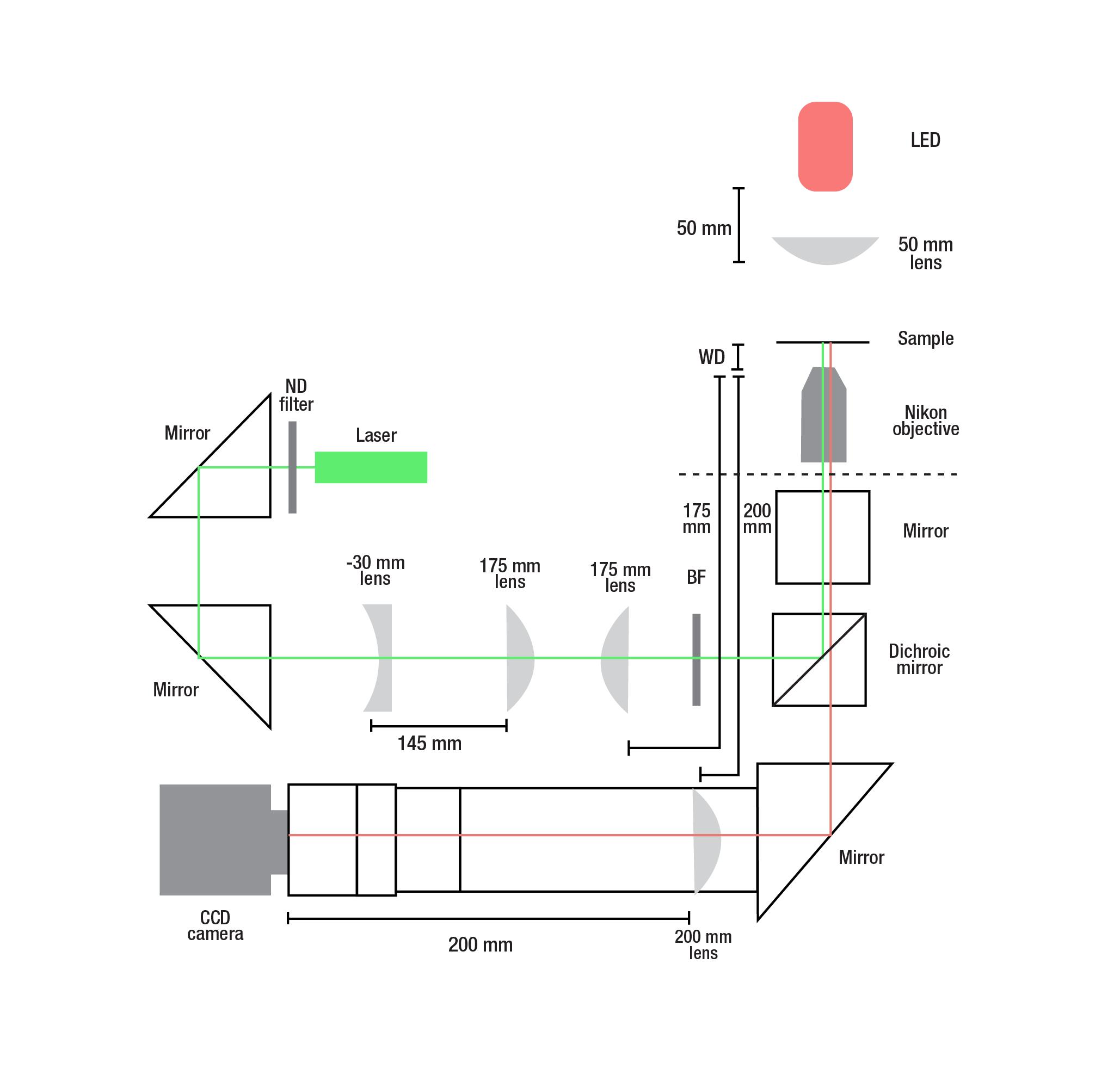 microscopy figures-01.png