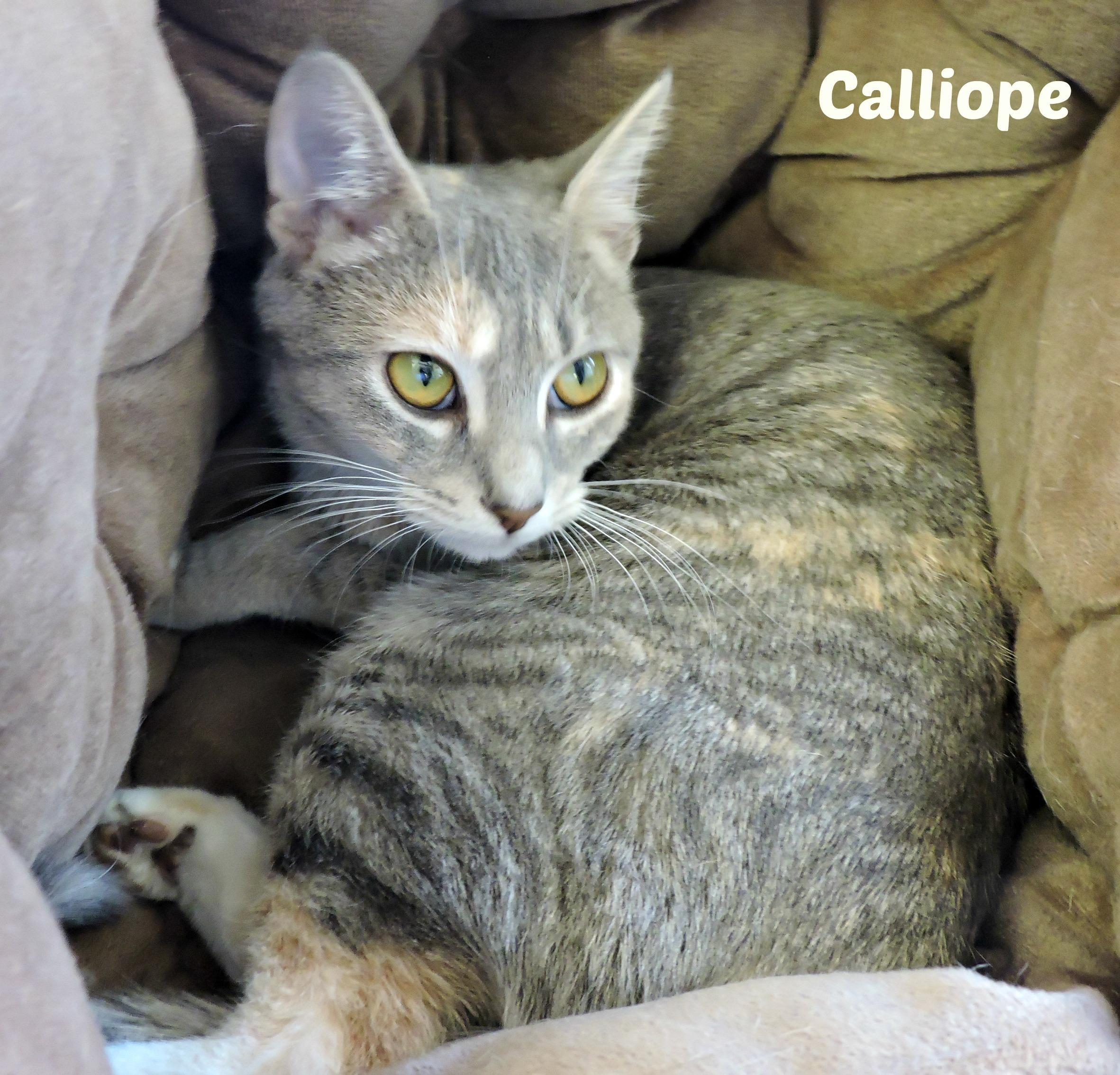 Calliope - ADOPTED! -