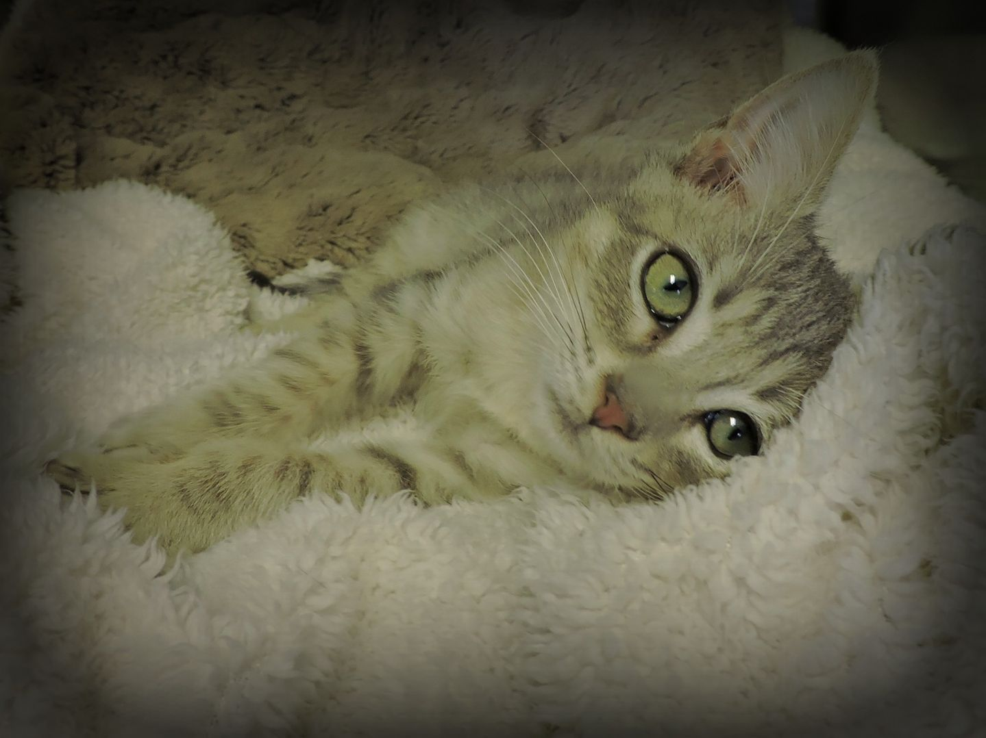 Catsanova -