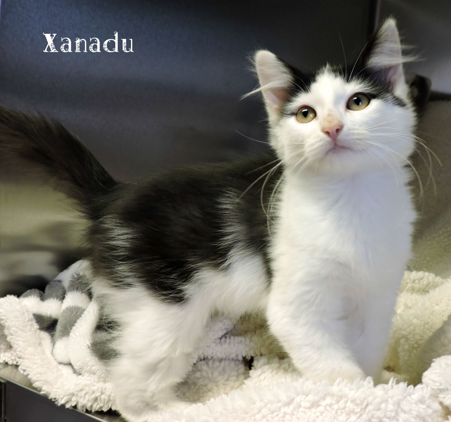 Xanadu -