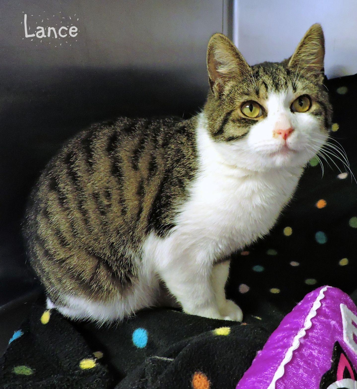 Lance -