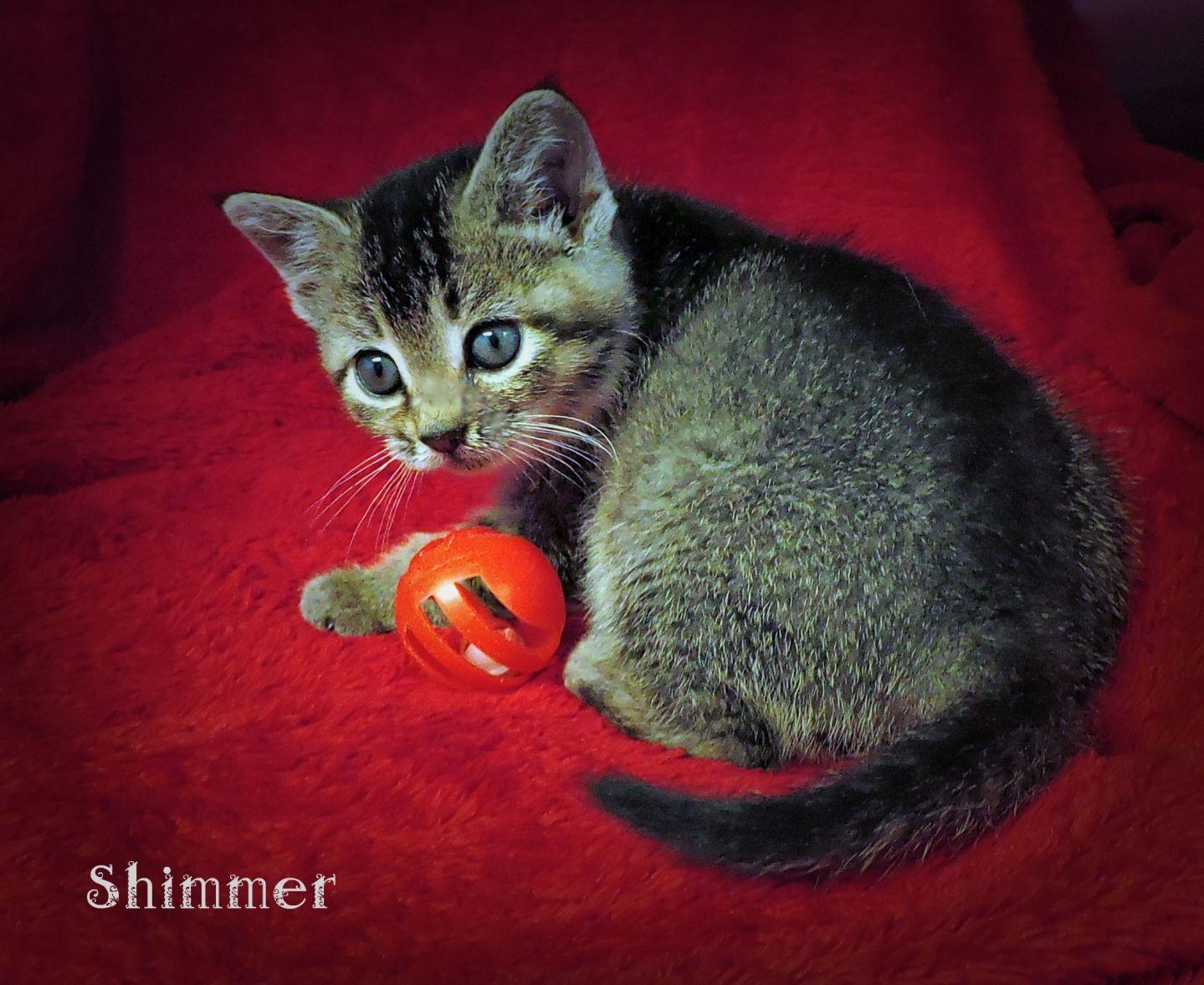 Shimmer -