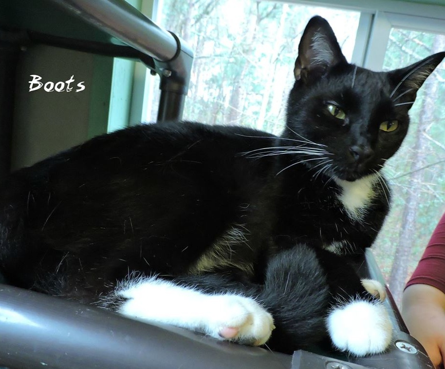 Boots/Figaro -