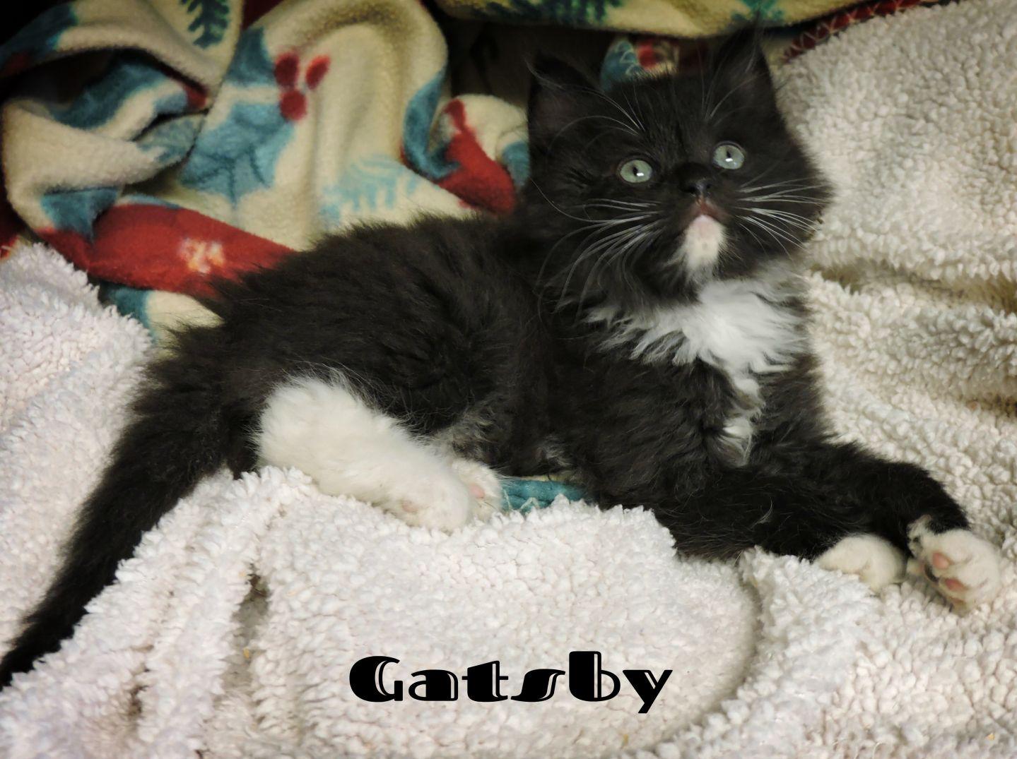 Gatsby -