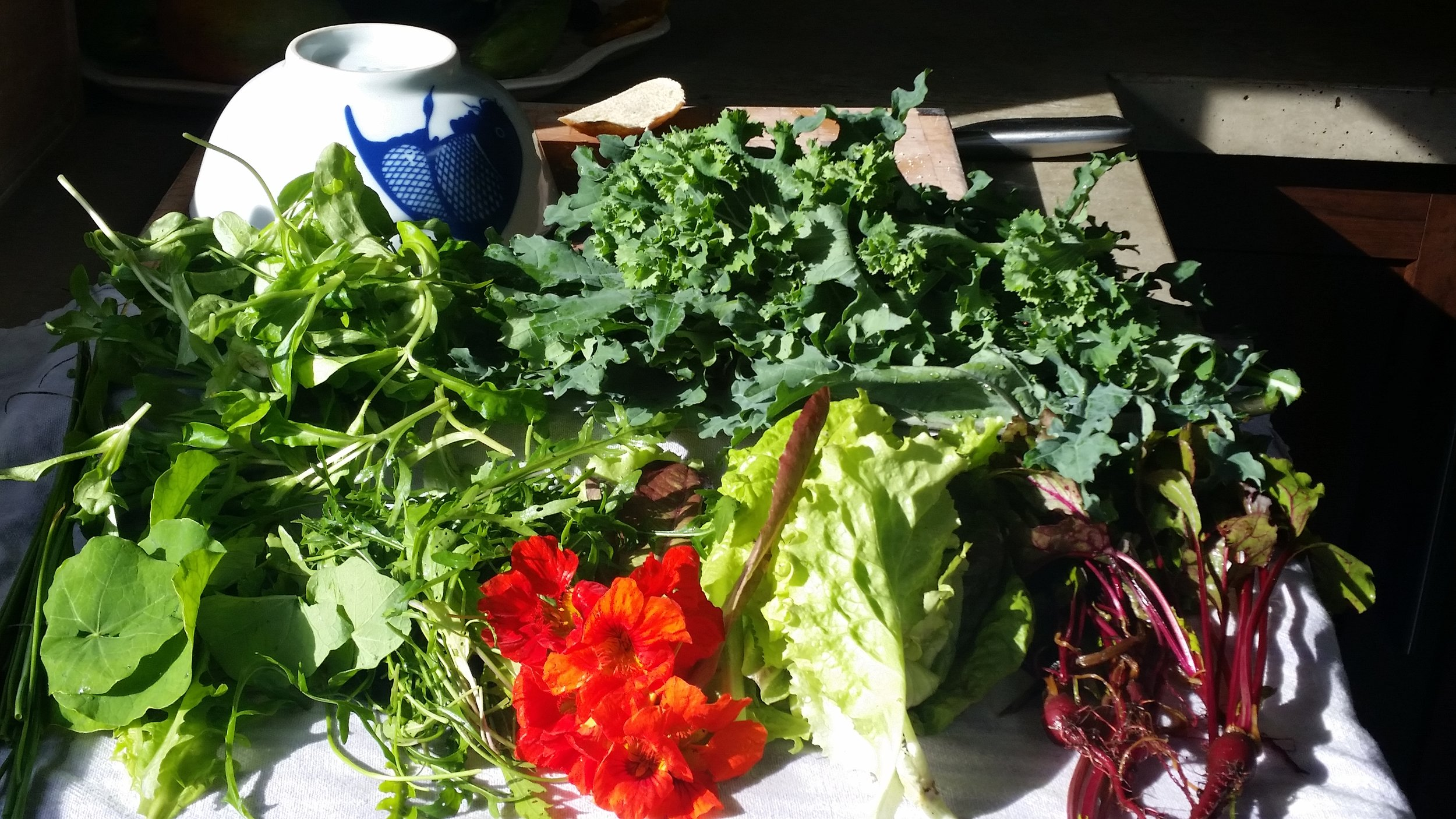 A friend and I harvested these nourishing greens in September.