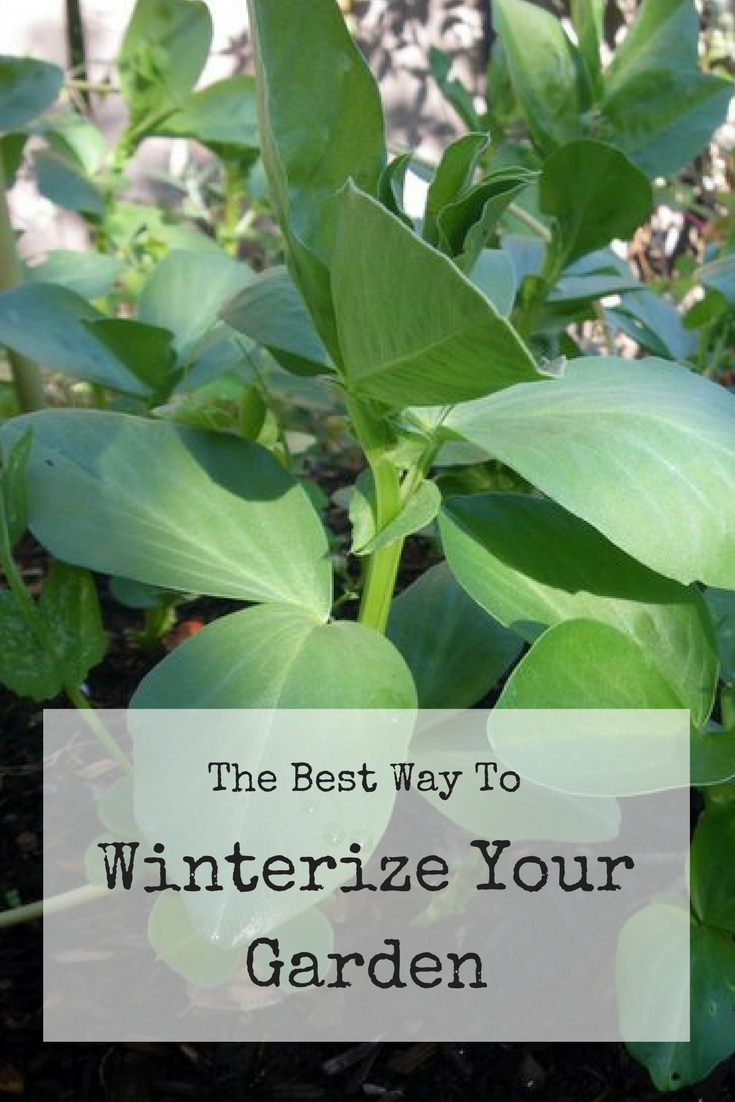 The best way to winterize your garden!