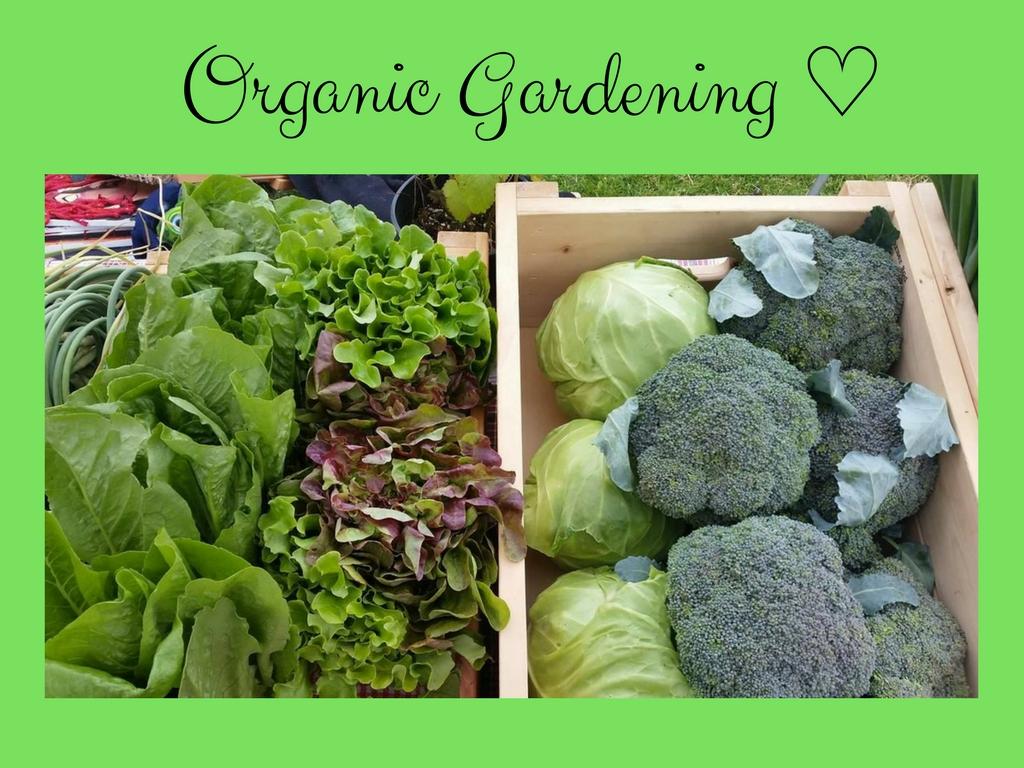 Organically grown food tastes better #garden #gardening #DIY