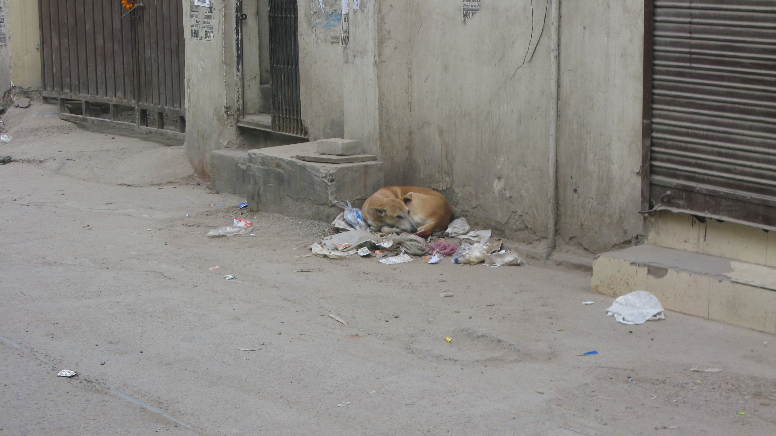 Street Dog Garbage - F*ck Plastic