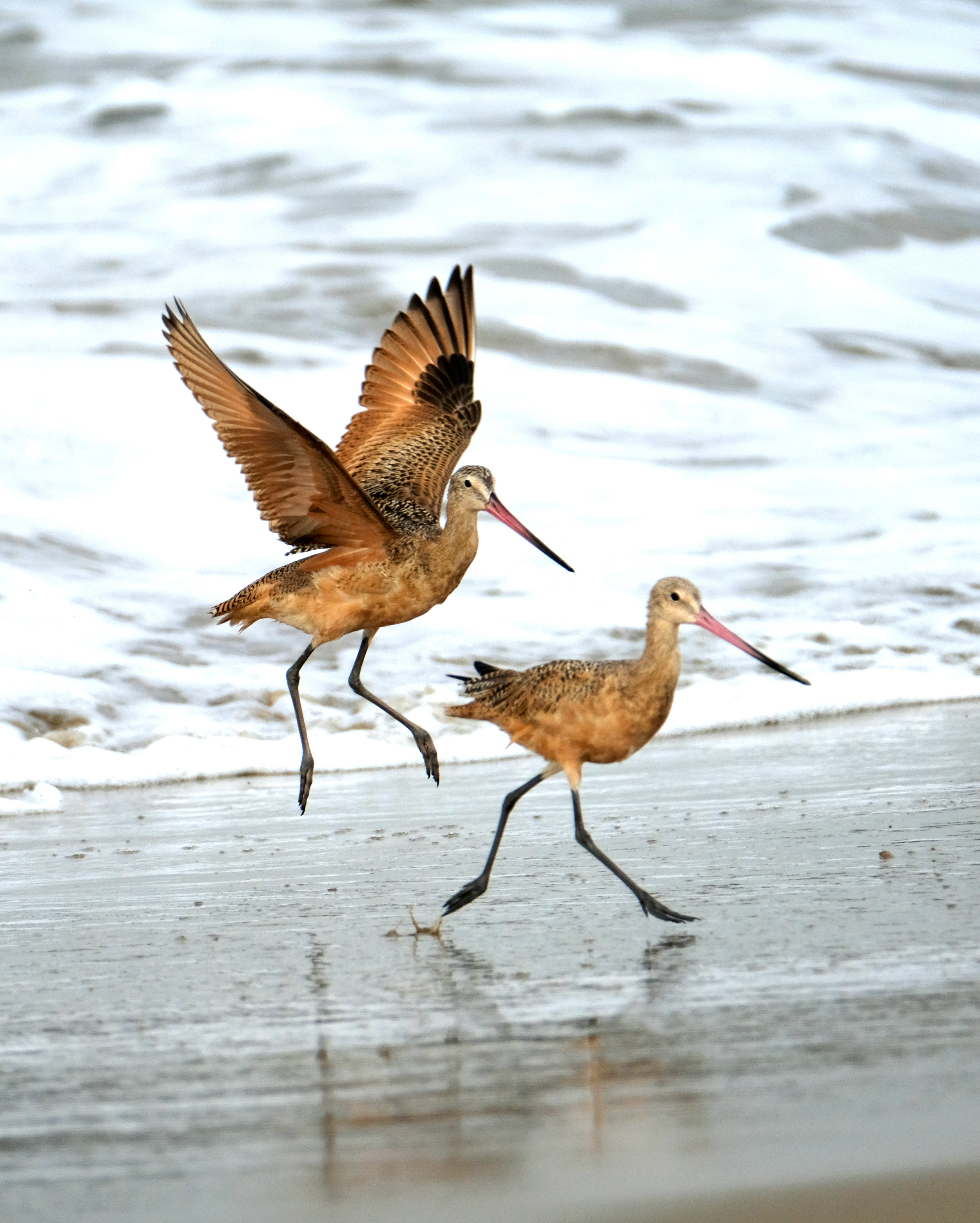 The Sandpiper Duo