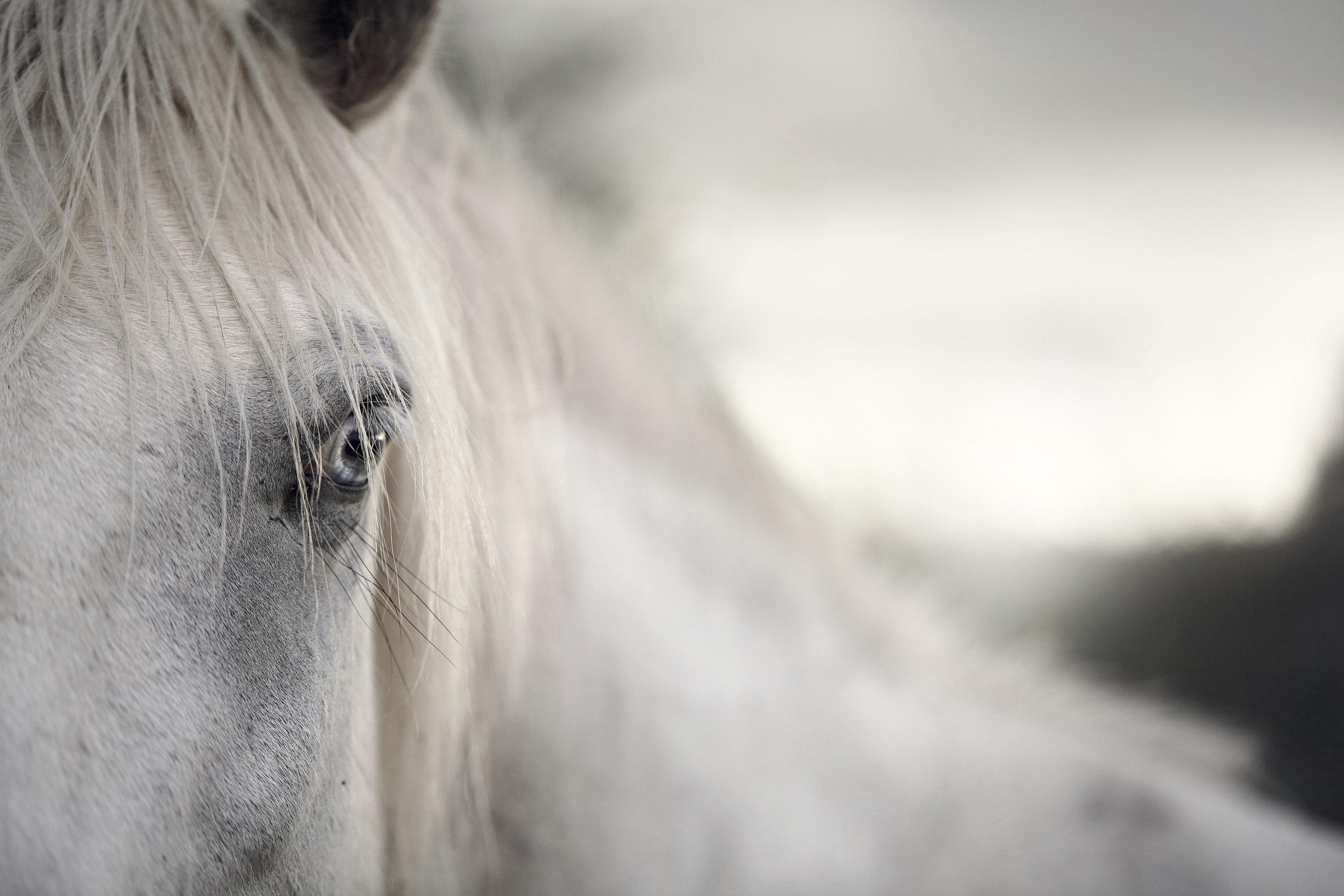 horseStock.jpg