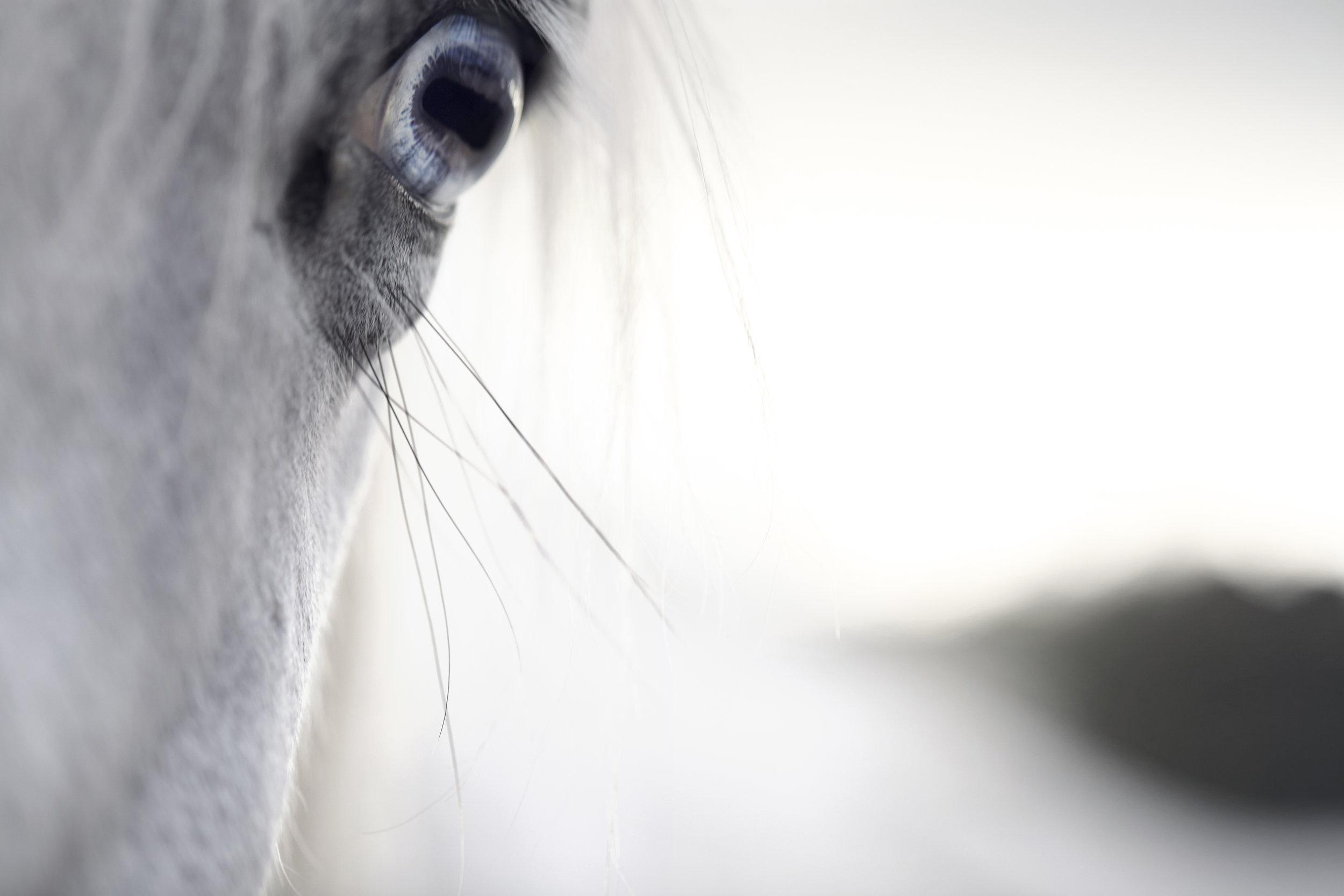 horseStock3.jpg