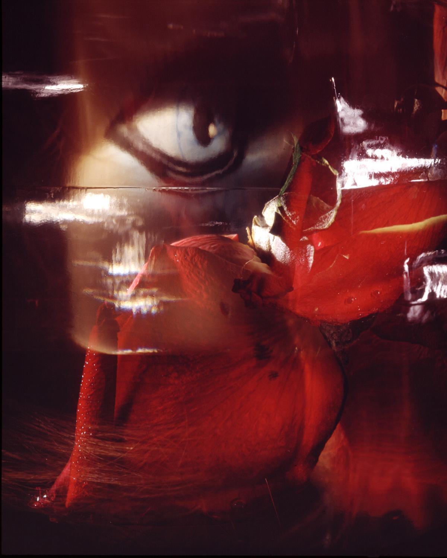 Rose #2 , 1996