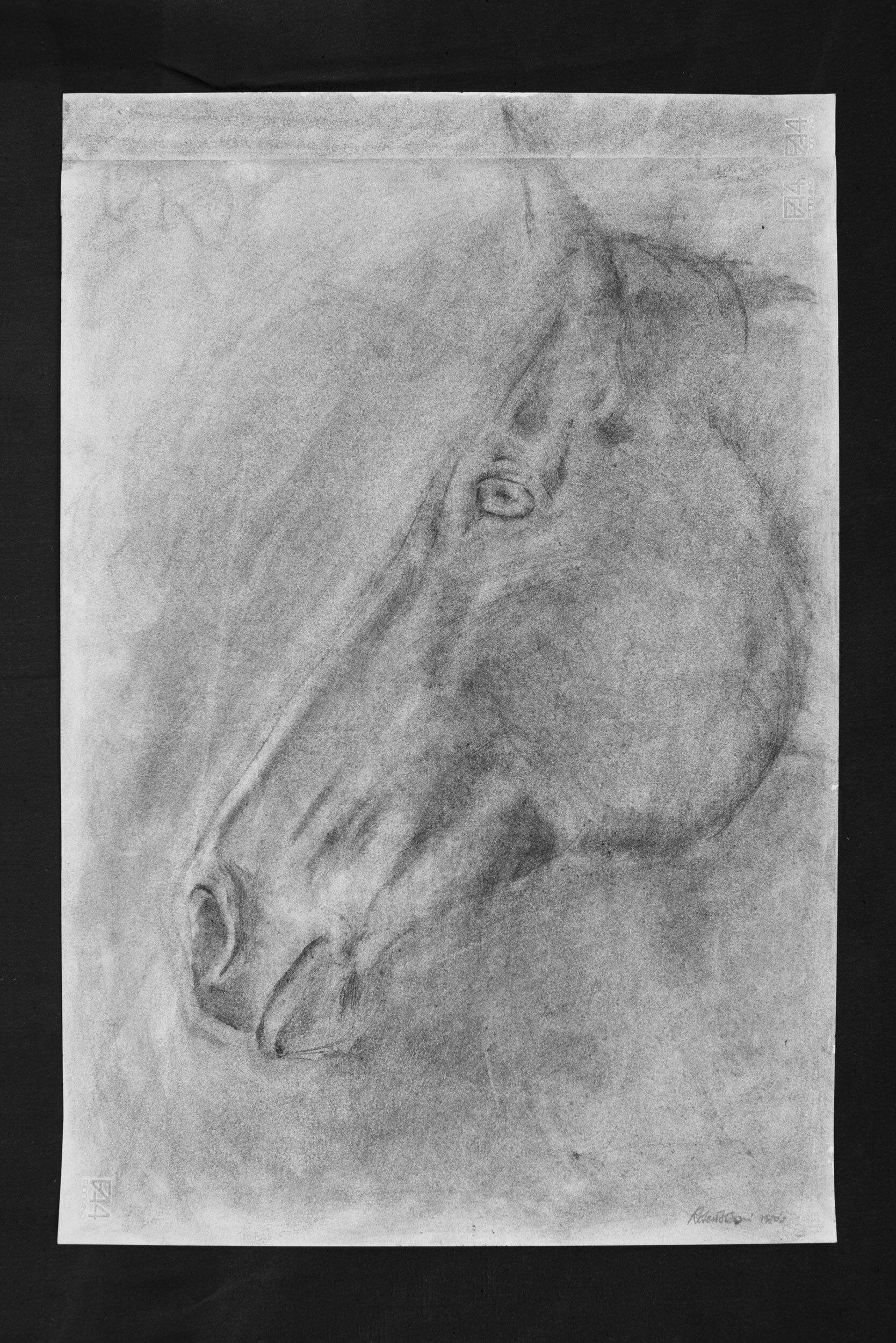 Horse #05