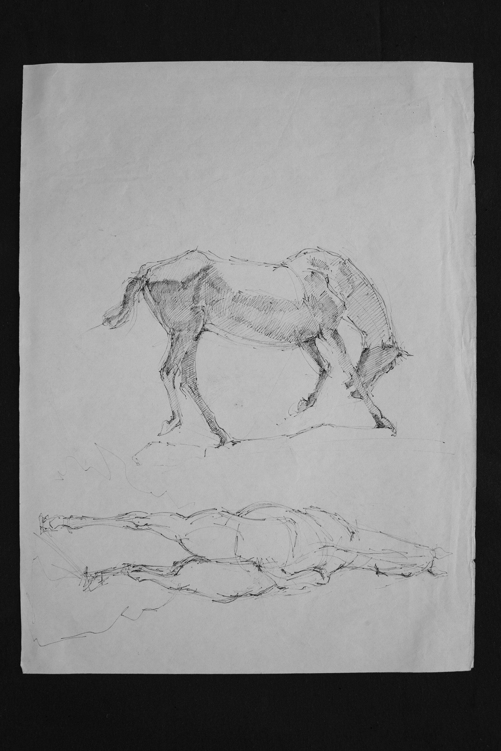 Horse pen schetch 00
