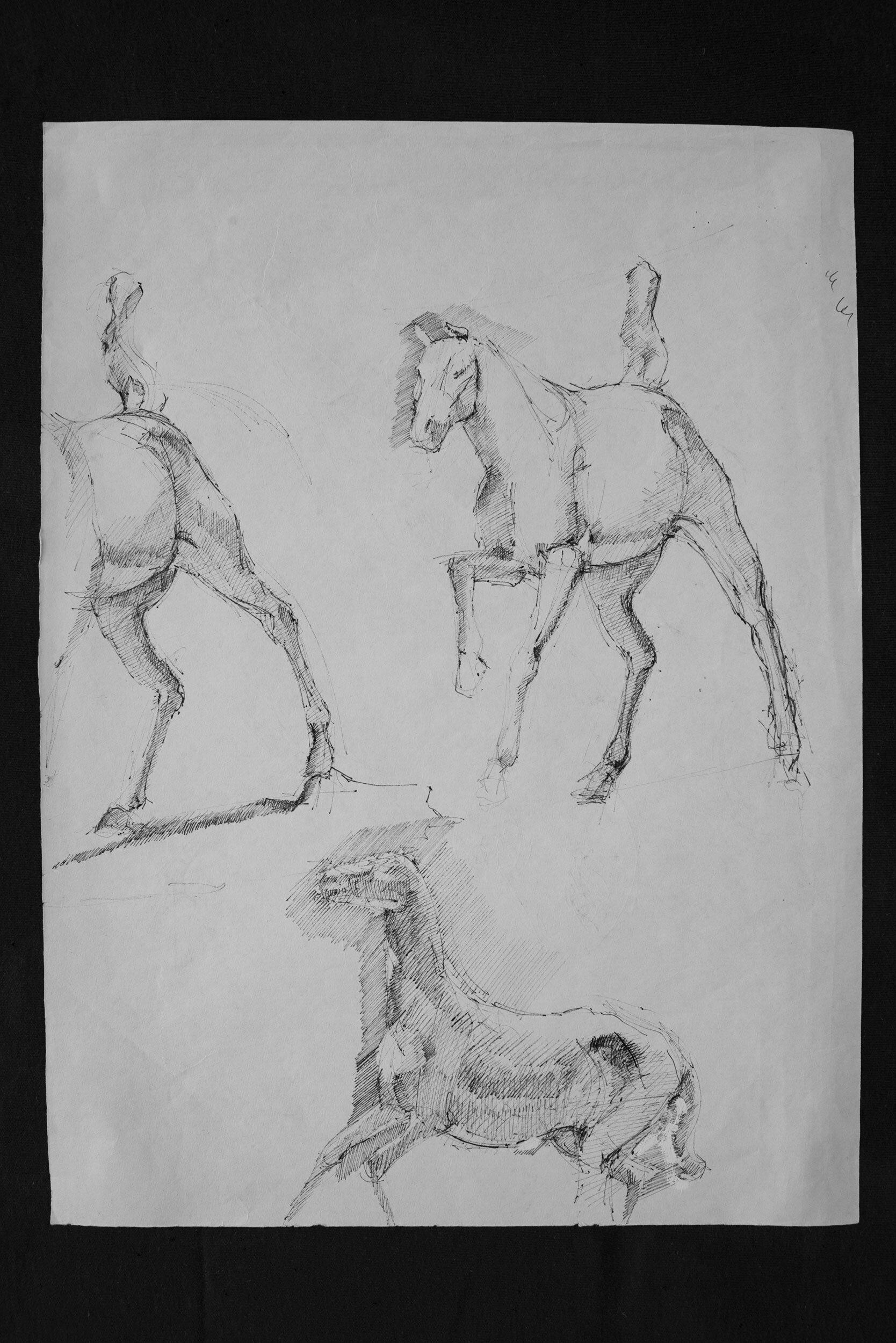 Horse pen schetch 03