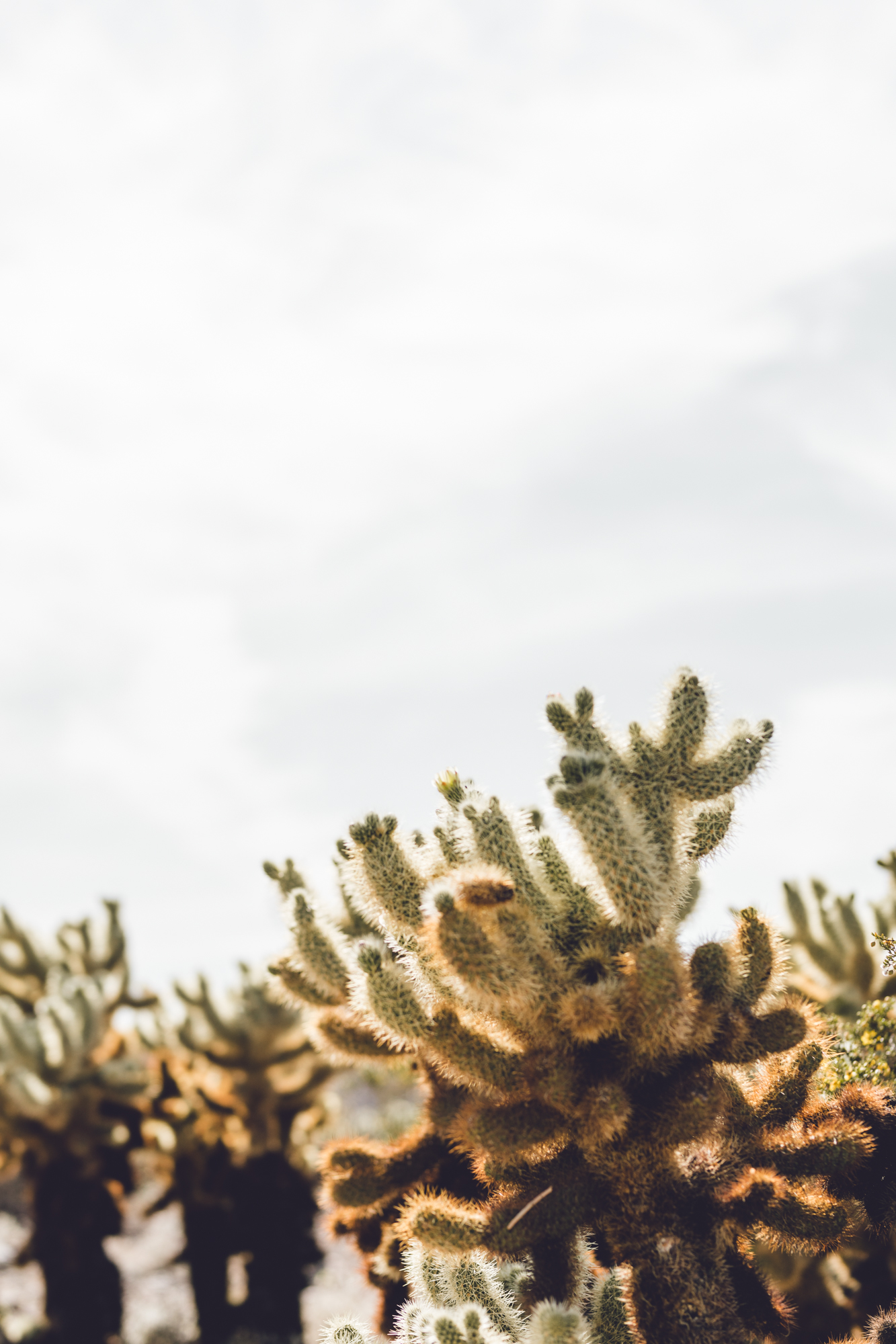 Rachel Off Duty: How to Spend 1 Day in the Central California Desert - Cholla Cactus Garden