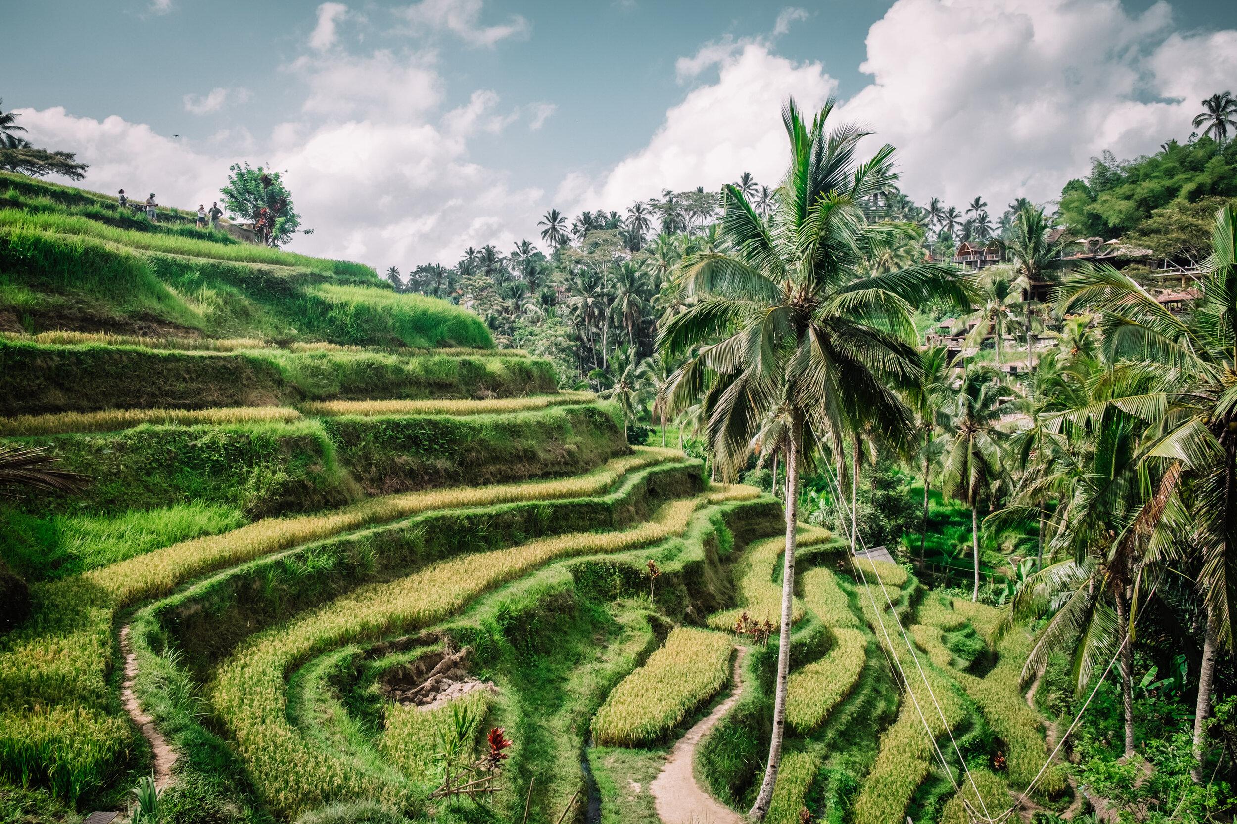 Rachel Off Duty: Tegalalang Rice Terraces in Bali