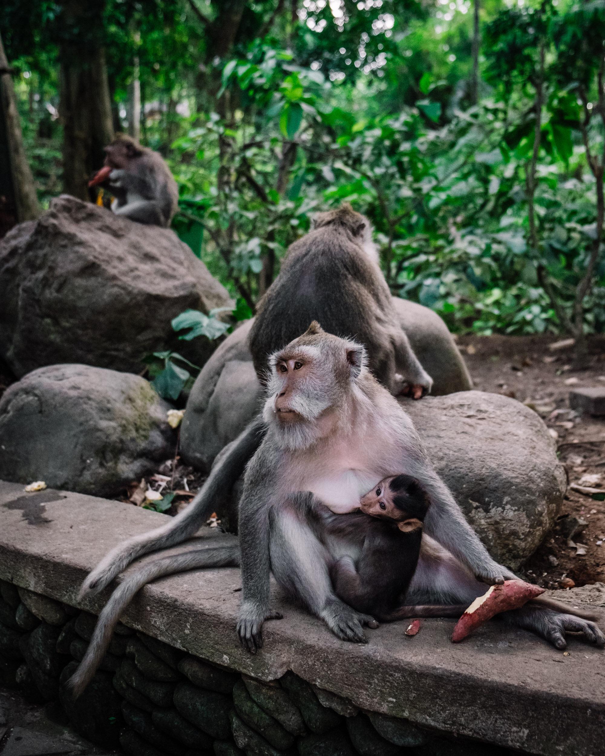 Rachel Off Duty: Monkeys in Ubud Sacred Monkey Forest Sanctuary