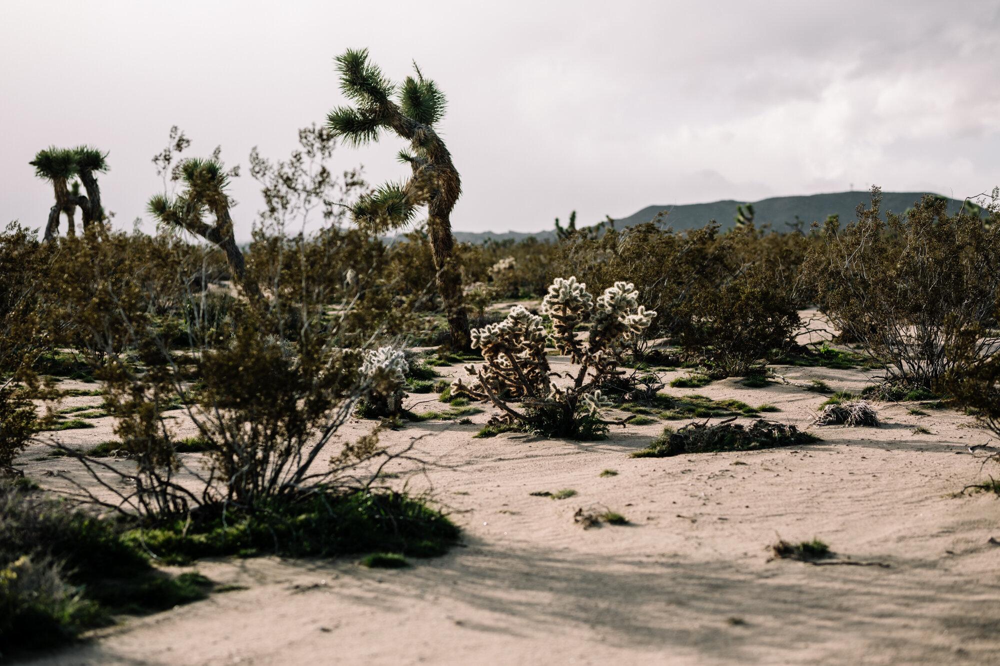Rachel Off Duty: Joshua Tree National Park, California