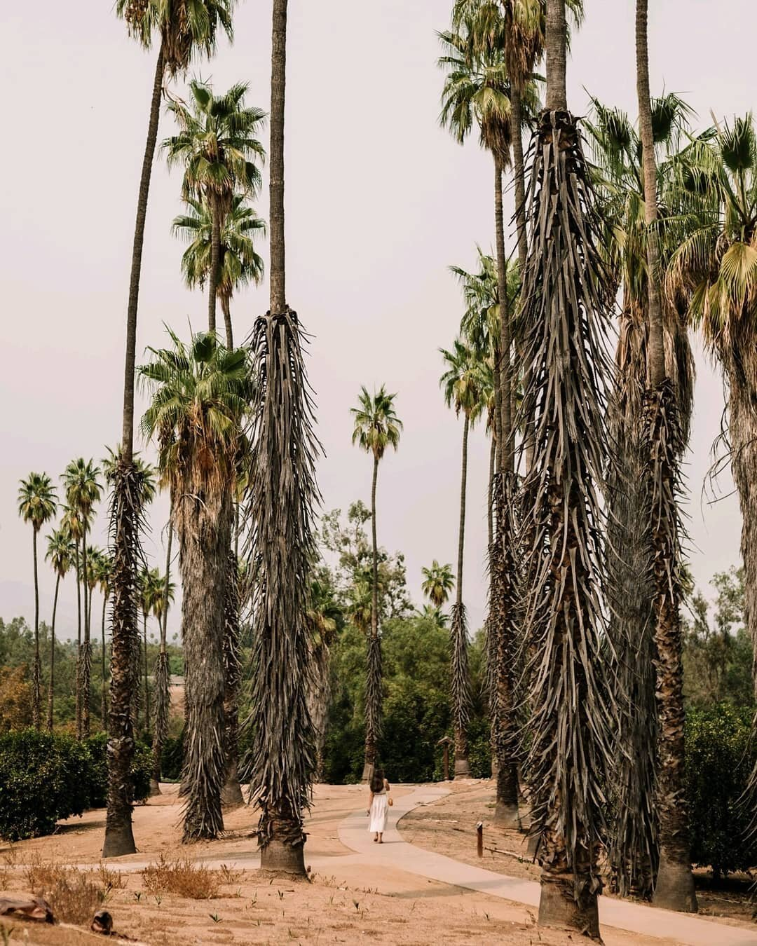 Chasing the final moments of summer 🌴⠀ ⠀ On our way back home from Joshua Tree, we discovered this place (some people choose gas stations to stop at for bathroom breaks, I choose state parks...?) This gorgeous spot in Riverside is the California Citrus State Historic Park, and you can find rows and rows of citrus trees, palms, and flowers everywhere you look! Oh, and you can find bathrooms here. So that was great, too 😉 we ended up having the entire park to ourselves, which was insane. #OffDutyinCalifornia ⠀ ⠀ What are you up to this weekend?