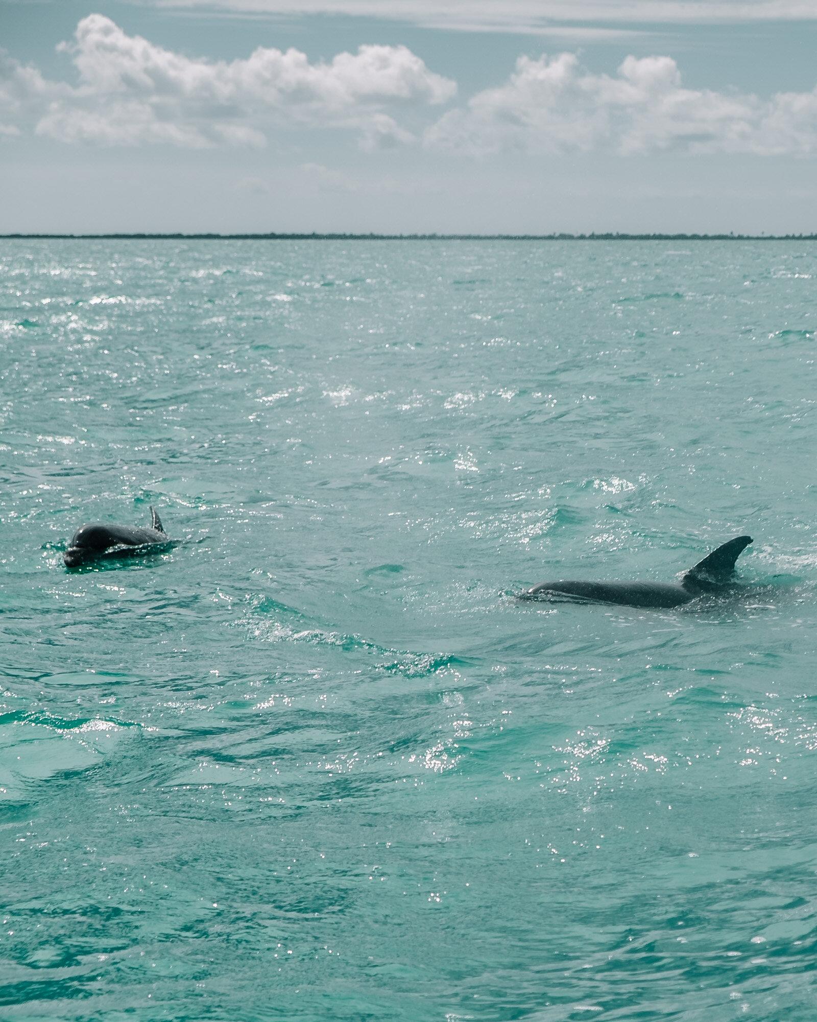 Rachel Off Duty: Dolphins in Sian Kaan, Tulum, Mexico