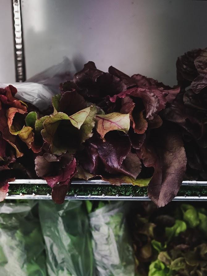 Care lettuce.jpg