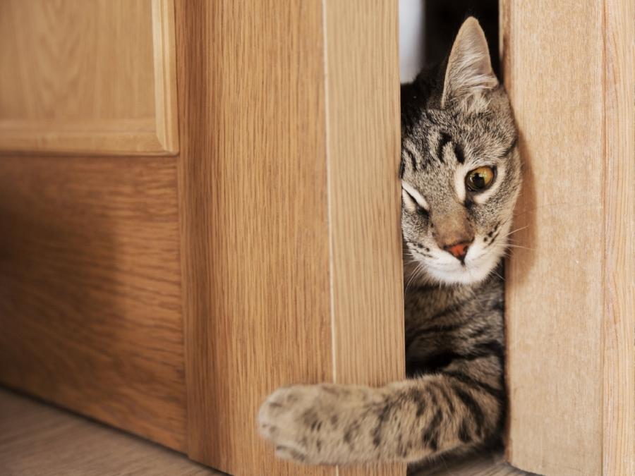 kittydoorblog.jpg