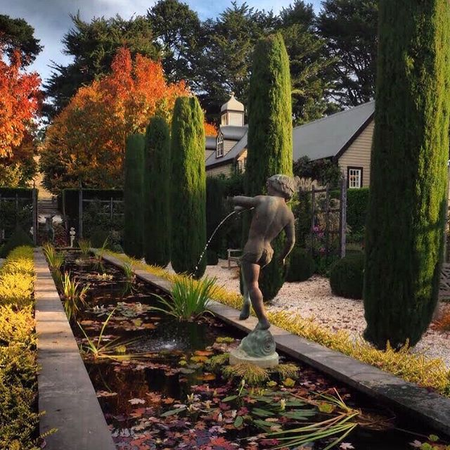 It's taken time and care to get our water feature looking so good. Close to the end of last winter the tank garden needed special attention 🐸 We're very happy to see this space come so far #gardencare #autumngarden #muskfarm