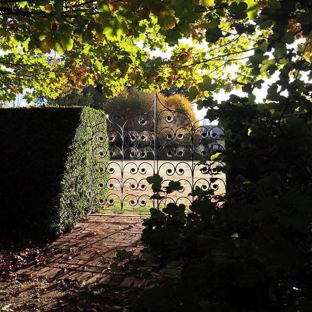 An autumn garden view from under the Maple tree, 🍁 through the blue gates (that we are forever dusting). The gates here attract your eye back to the main house through one of the clean axis lines the landscape design had evolved around so many years ago now. ⠀ ⠀ #gardenmood #autumngarden #muskfarm