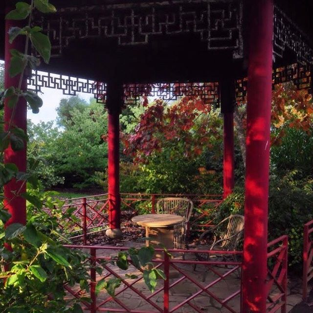 A moment from under the Chinese pergola. This beautiful structure has been restored twice now, it visually fits the garden space most in autumn but at first sight often looks out of context as it's a genuine imported pergola...of course it's authentic in the true tastes of Stuart Rattle #autumngarden #chinesepergola #muskfarm
