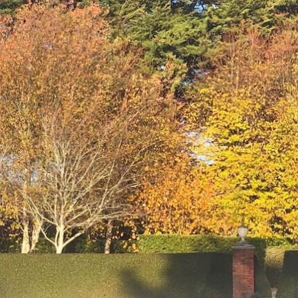 These photos from our gardener are going in to the autumn album that we are compiling 🍁 we love his work!  All our guests see and interpret the garden differently, if you're happy for us to share your moments, we do love being tagged in photos especially ones taken on tour. As always, we welcome and look forward to having guests and visitors at Musk Farm today, pack an umbrella for the afternoon 🌂 #muskfarm #autumngarden #opengardentours