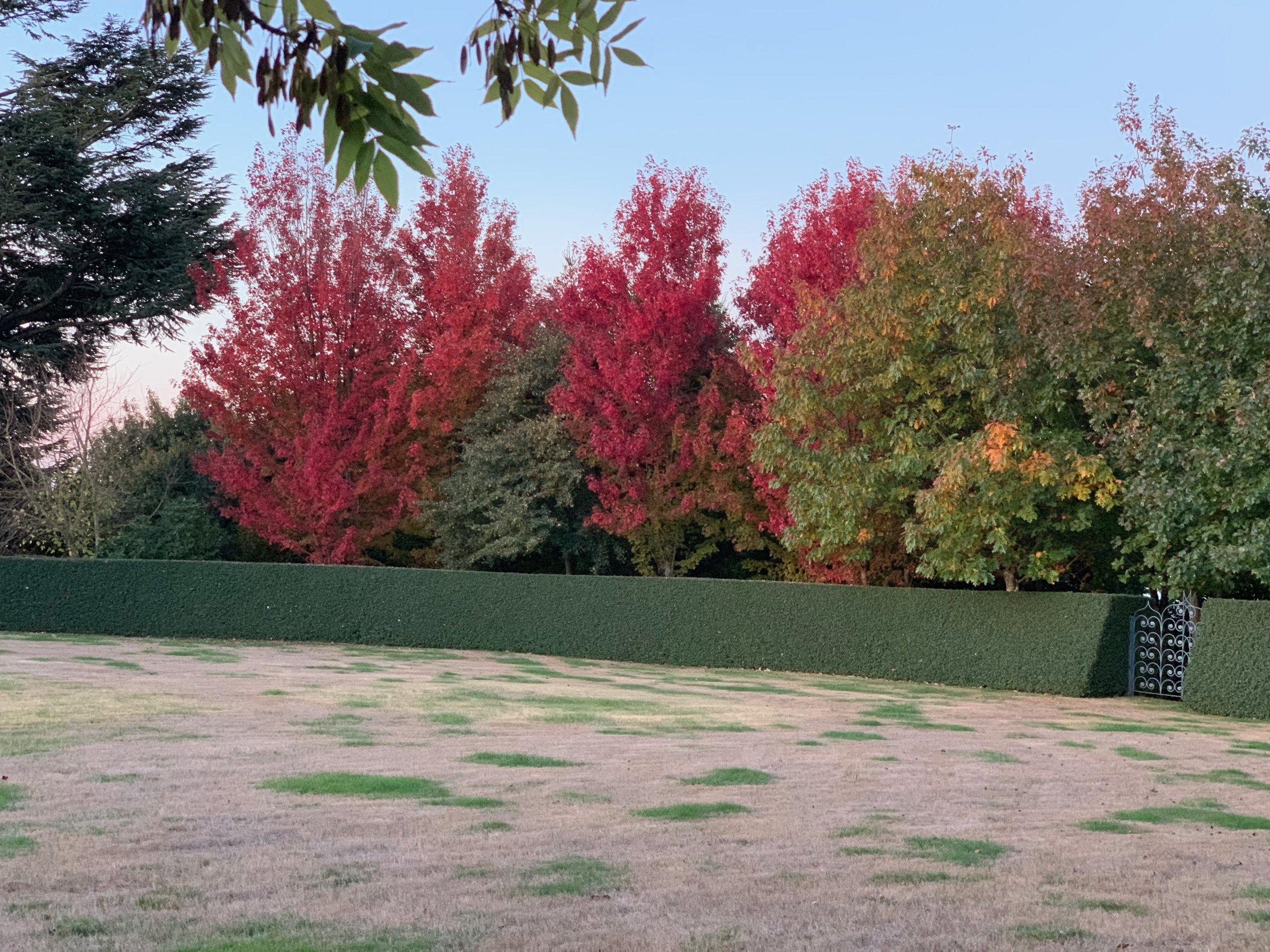 musk_farm_oval_autumn_IMG_0025.jpeg