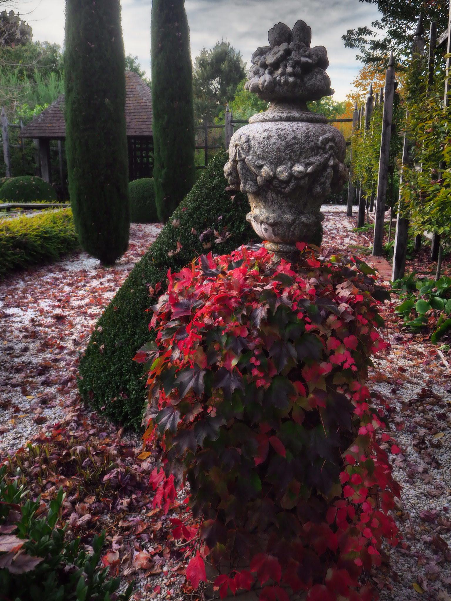 muskfarm_autumn_vines_englis_IMG_3484.JPG