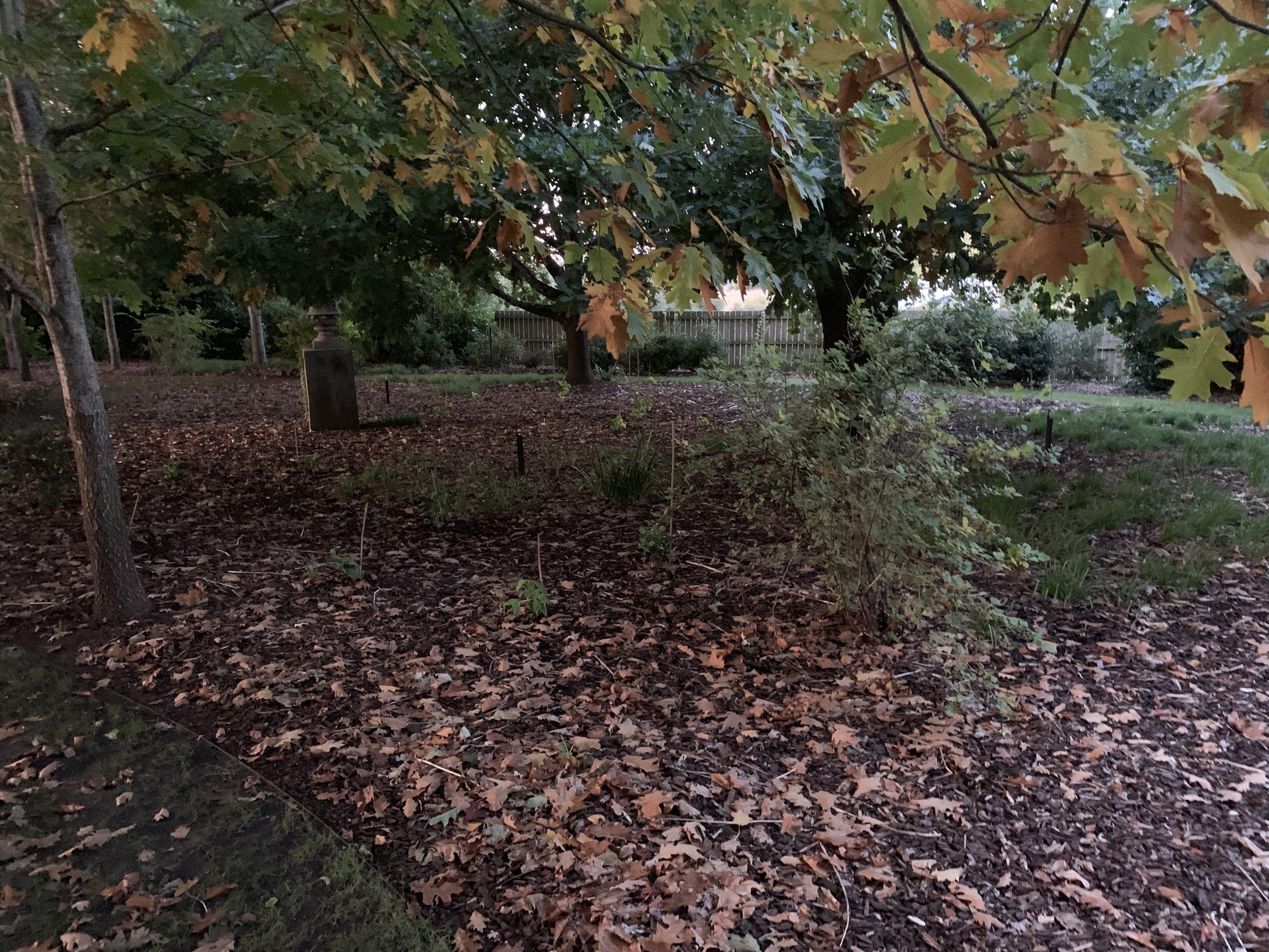 muskfarm_english_garden_acorn_tree_IMG_0028.jpeg