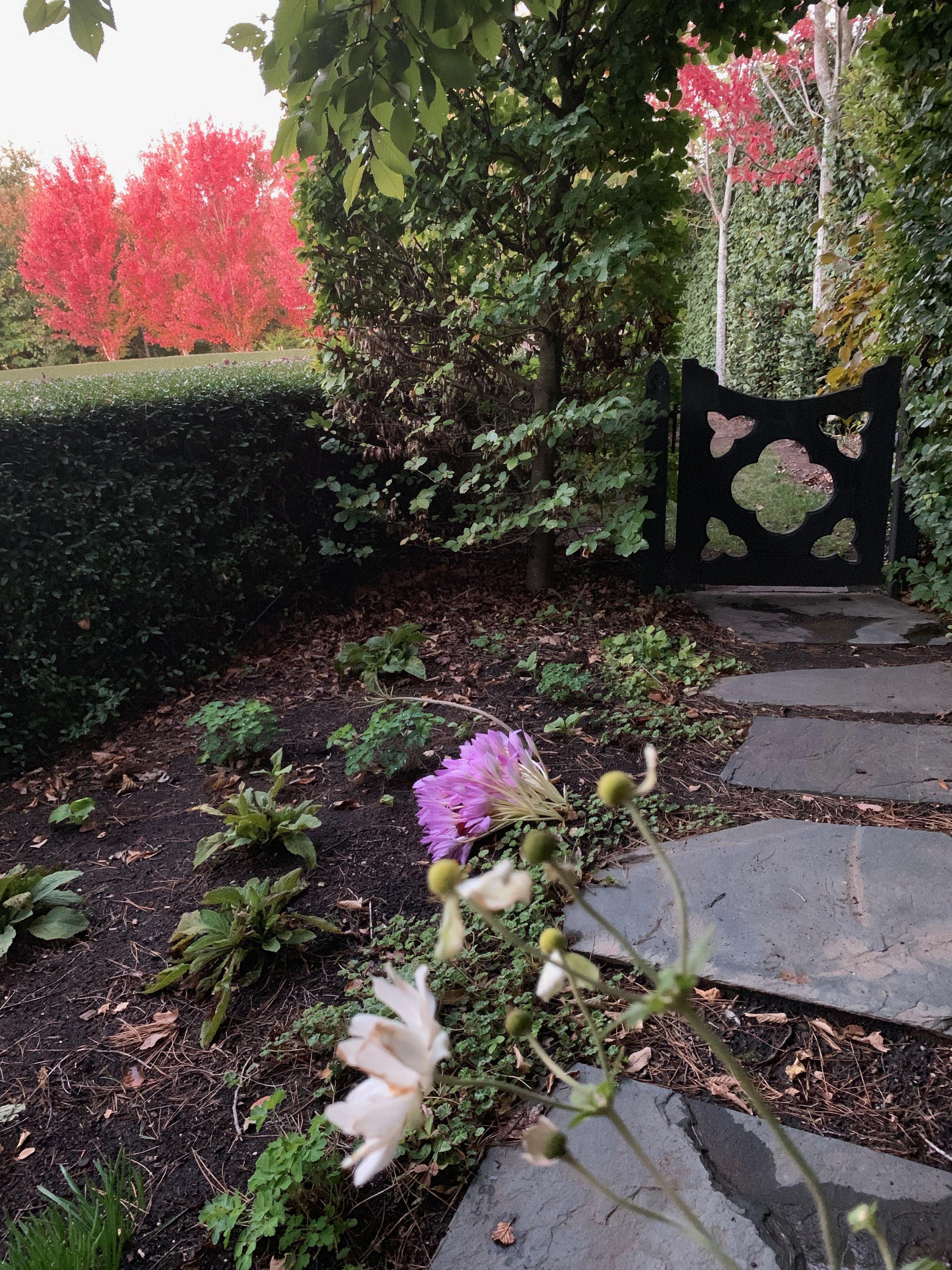 muskfarm_lipstick_maple_trees_crocus_autumn_flower_garden_IMG_0023.jpeg