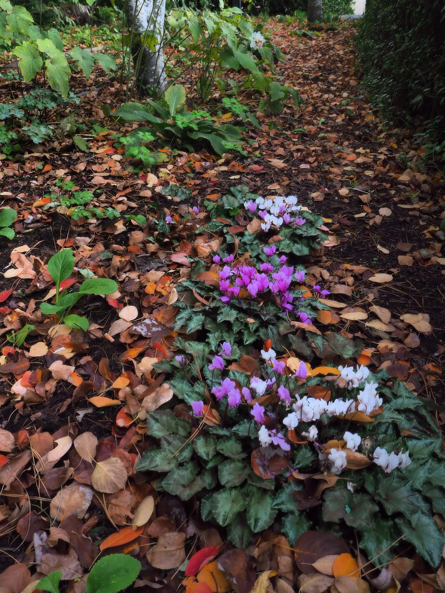 muskfarm_tank_garden_flowers_daylesford.JPG