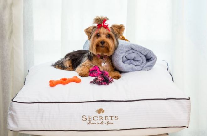 LEARN MORE  about bringing your dog with you on vacation!